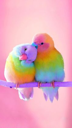 Cute Birds, Pretty Birds, Beautiful Birds, Animals Beautiful, Wallpapers Android, Cute Wallpapers, Wallpaper Wallpapers, Wallpaper Samsung, Cute Wallpaper Backgrounds