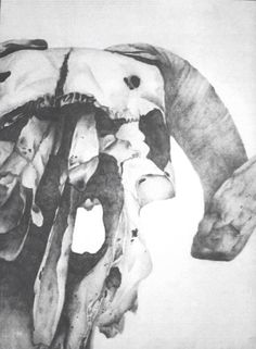 Close up amazing tonal qualities Observational Drawing, Animal Skulls, Close Up, Bones, Moose Art, Objects, Decay, Drawings, Nature