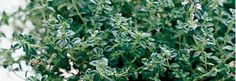 Thyme is my other go to herb (after rosemary).  It works in most anything and adds a punch of flavor.