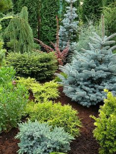 beautiful conifer garden. So many different colors and presentations. I would love to have this in my yard.