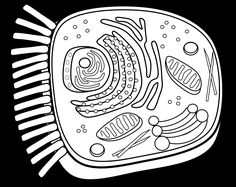 The Best Animal Cell Coloring Sheet Http Coloring Alifiah Biz Cell Coloring Page
