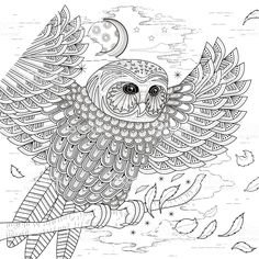 Phoenix Bird Coloring Pages Lovely Bird Coloring Page Stock Vector Illustration Of Vector Owl Coloring Pages, Coloring Pages For Grown Ups, Free Adult Coloring Pages, Pattern Coloring Pages, Free Printable Coloring Pages, Coloring Books, Mandala Art, Bird Drawings, Free Vector Art