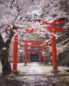 Concept(s): Radical balance, Unity, Movement. Japanese Shrine, Japanese Art, Japanese Temple, Japanese Geisha, Japanese Kimono, Naha, Japon Tokyo, Monte Fuji, Japanese Landscape
