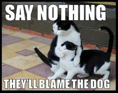 Say Nothing funny memes dogs cat cats meme lol funny quotes cute. humor dog. kitten
