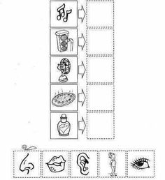 Crafts,Actvities and Worksheets for Preschool,Toddler and Kindergarten.Lots of worksheets and coloring pages. Senses Activities, Science Activities For Kids, Educational Activities, Teaching Kids, Kids Learning, Five Senses Worksheet, Cut And Paste, Preschool Worksheets, Kids Education