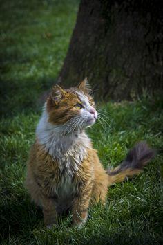 Cat by Yasar Ugurlu  on 500px