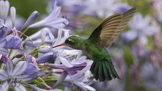 The Best Flowers To Attract Butterflies, Bees, and Hummingbirds - Southern Living