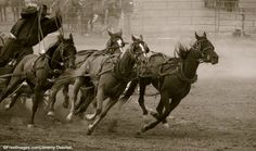 Urge the premier of Alberta to direct the Calgary Stampede to ban chuckwagon races immediately, before more horses die.