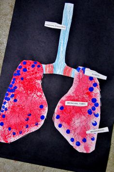 Respiratory System Activities, great art project and hands on lung demonstration