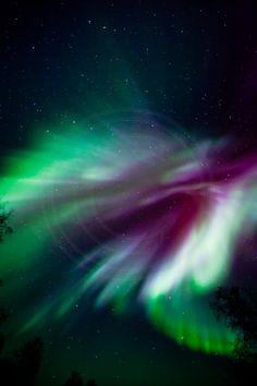 Phoenix Aurora - by Dora Miller