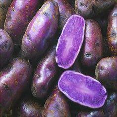 Purple Potato Seeds