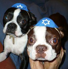 Jewish bostons:)