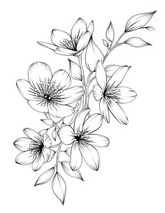 Adult Coloring Book Botanicum Flowers Digital Coloring 15 pages Printable x 11 pdf – beauty flowers Flower Sketches, Art Drawings Sketches, Tattoo Drawings, Floral Drawing, Art Floral, Adult Coloring, Coloring Books, Colouring, Beautiful Flower Drawings