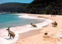 Bawley Point - Kangaroos, Pretty Beach, Merry Beach, Kioloa Beach, Shoalhaven South Coast