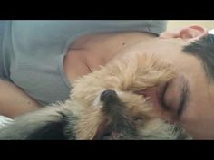 (CUTE VIDEO) Little Yorkie Petting His Human