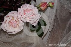 Light pink roses and white silk