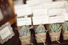 succulents as wedding favors and placeholder for the escort card. love!