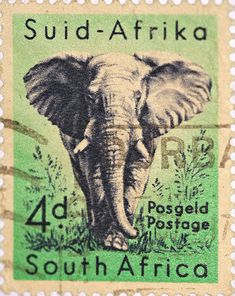 stock photo : SOUTH AFRICA-CIRCA A stamp printed in the South Africa, depicts animals from Kruger National Park, the African Elephant, circa 1954