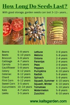 Long Do Seeds Last? How Long Do Vegetable Seeds Last? With good storage, garden seeds can last years / How Long Do Vegetable Seeds Last? With good storage, garden seeds can last years / Growing Plants, Growing Vegetables, Fruits And Veggies, Saving Seeds From Vegetables, Regrow Vegetables, Winter Vegetables, Gardening Vegetables, Organic Gardening, Gardening Tips