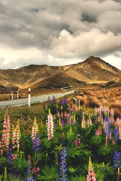 Lindis Pass, Otago, South Island, New Zealand Places Around The World, The Places Youll Go, Places To See, Beautiful World, Beautiful Places, Amazing Places, Living In New Zealand, New Zealand Landscape, Destinations