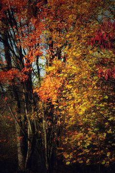 Autumn leaves🍁