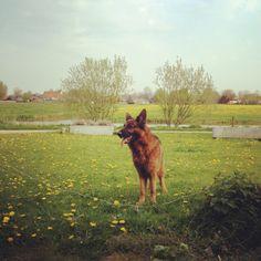 Great dog!!