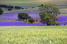 South Australia-Clare valley