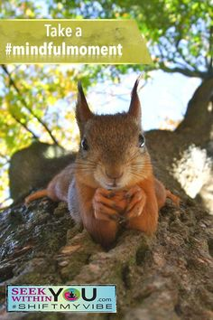 It's time for another #mindfulmoment to raise our vibration. Gently observe this squirrel - eyes, ears, fingers, fur, whiskers, color variations, etc. Really take your time and observe without judgment. How do you feel now after this exercise? Do you feel more grounded? #mindfulmoment #shiftmyvibe #spirituality #raiseyourvibration #mindfulness #lawofattractionhealth Guided Meditation For Relaxation, Meditation For Health, Meditation Scripts, Healing Meditation, Meditation Practices, Mindfulness Meditation, Spiritual Guidance, Spiritual Awakening, Law Of Attraction