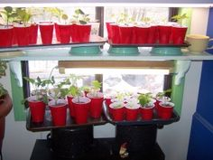 The cost of growing your own food?---Like this red solo cup idea---reuse each year and easy to store! Growing Gardens, Growing Plants, Red Solo Cup, Starting Seeds Indoors, Backyard Vegetable Gardens, Diy Crafts Hacks, Spring Plants, Indoor Flowers, Grow Your Own Food