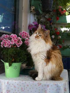 Adı : Lulu Irkı : Ankara Kedisi (Angora) Cinsiyet : Erkek Kedi  Lulu 12 yaşında kaprisli bir prensestir ve benim ilk kedimdir. Her gün ton balığı yiyebilmek için yapmadığı arsızlık kalmaz. Son zamanlarda lavabo tepesinde çok vakit geçirip su içmek istiyor. Çok yeni diyabet teşhisi kondu, tedavisine başlandı. Uzun süre bizimle olmasını diliyoruz.