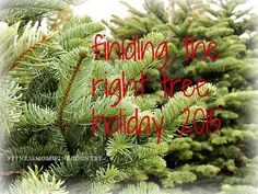 Finding The Right Christmas Tree