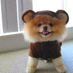 secret to happiness: nonchalance; not caring what anyone thinks; dressing up like a bear occasionally.