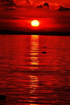 Lazise it. The sunset at Lazise,Lake of Garda Italy. Tramonto Lazise it. by Elias Arcos Hdez, Province of Verona VenetoThe sunset at Lazise,Lake of Garda Italy. Tramonto Lazise it. by Elias Arcos Hdez, Province of Verona Veneto Cool Photos, Beautiful Pictures, Red Pictures, Red Wallpaper, Amazing Sunsets, Red Walls, Beautiful Sunrise, Red Aesthetic, Shades Of Red