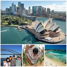 Study English in Sydney and meet this cutie! http://www.timpany.com/learn-english/langports-sydney.html