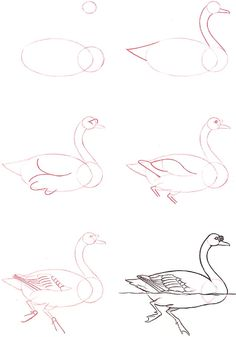 how to draw a swan for kids