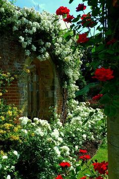 Rose Garden at Hever Castle by Jason Ballard    #roses #flowers #garden