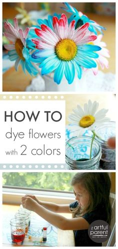 How to dye flowers with two colors (or even more!). This simple science experiment is fun for kids and also results in some interesting flower bouquets!