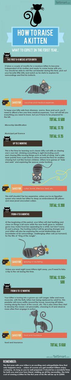 Infographic: How To Raise A Kitten - DesignTAXI.com