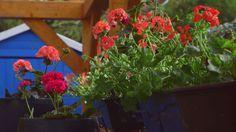 Disfruta de tus plantas también en balcones pequeños con estos ejemplos. Nos encanta disfrutar de las plantas y adornar nuestros balcones.