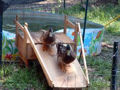 @Lesley Rasmussen McKee you need on of these for your ducks!