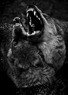 """The Norwegian photographer Christian Houge's project """"Shadow Within"""" takes a close look at wolves, which he says can teach humans a lot about the instincts and impulses surpressed by culture."""