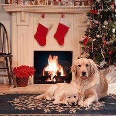 Lo se Sharpey, te dije que si pasabas la navidad aqui nos darian un monton de regalos, pero olvide decirte que era a las 12:00 MIRA!!! LO ADELANTARON!!! son las 11:59 y ya los traen!!!