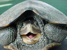 turtle How Animals Look Like When They Are Surprised
