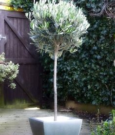 1000 Images About Miami Landscaping On Pinterest