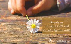 Recuerda que la belleza está en las pequeñas cosas.   #frases #inspiracion #belleza  http://www.ConociendoTuMente.com/
