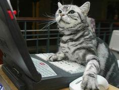 Śmieszny kot programista