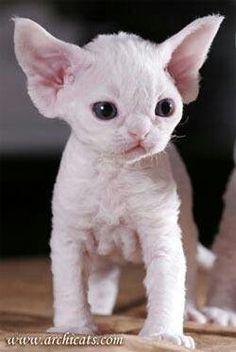 Omg i want one...