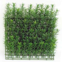 Pacific Silkscapes introduces a new line of boxwood wall mats used to create artificial garden walls. We can also apply to walls and outdoor structures. Artificial Plant Wall, Artificial Boxwood, Outdoor Walls, Indoor Outdoor, Boxwood Garden, Ivy Wall, Flower Wall, Outdoor Structures, Green