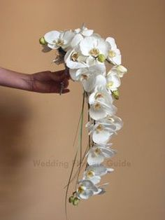 My all time favorite, and in my wedding boquet. My all time favorite, and in my wedding boquet. Orchid Bridal Bouquets, Bride Bouquets, Bridal Flowers, White Orchid Bouquet, Cascading Flowers, Elegant Flowers, Beautiful Flowers, Trailing Flowers, Blue Bouquet