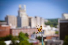 Dragonfly hanging out on a lightning rod on top of the Municipal Building.